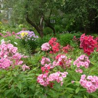 Хороши цветочки :: Светлана Лысенко