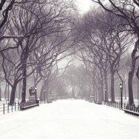 зимний парк :: Виталий Реут