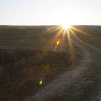 дорога к солнцу... :: Tatiana Florinzza
