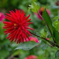 Осенние цветы :: Эдуард Пиолий