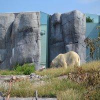 Зоопарк в Копенгагине, Дания :: Lyubov Zomova