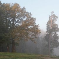 В рассветном тумане :: Юрий Цыплятников