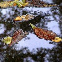 Осенние листья... :: Владимир Секерко