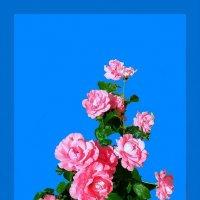 Розовый куст :: Владимир Хатмулин