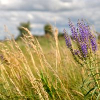 сибирские травы. август :: Светлана Абатурова