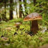 За грибами в лес пришла.... :: Елена Kазак