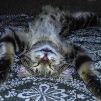 Кошачья нирвана :: Никита Иванов