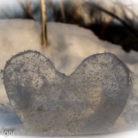 холодное сердце :: игорь душкин