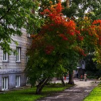 Осенние зарисовки :: Sergey Kuznetcov