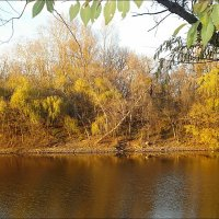 Золотые краски ноября :: Нина Корешкова