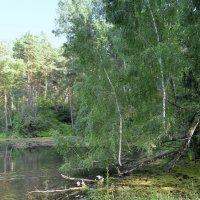 На старом пруду . :: Мила Бовкун