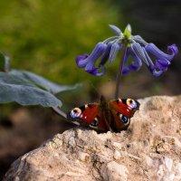 Краски природы :: Елена Ахромеева