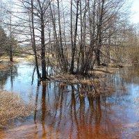 Весна-Разлив :: Аленка Курылева