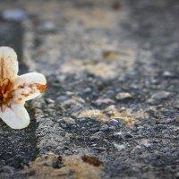цветок на асфальте :: koncyella смирнова