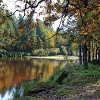 До срока опадают листья дуба... :: Лесо-Вед (Баранов)