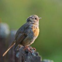 птаха :: Сергей Иванов