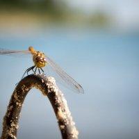 у меня тоже есть стрекоза! :: Аида Хуснутдинова