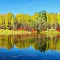 Осенние краски :: Юрий Кузмицкас