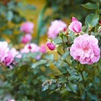 цветы :: Борис Васильев