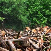 Лес срублен, но еще видно его дыхание :: Svetlana AS