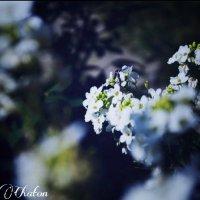 Цветочки :: Anna Chaton