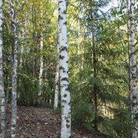Осенью в лесу. :: Галина .