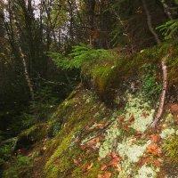 Лесной склон. :: Михаил Попов