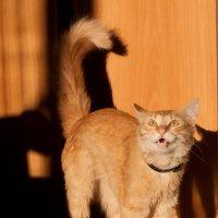 Солнечный котейка) :: Михаил Желтов