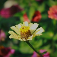 Цветочек :: Кристина Щукина