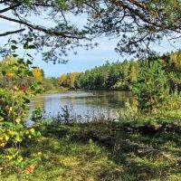 Солнечная осень у реки :: Юрий Кузмицкас