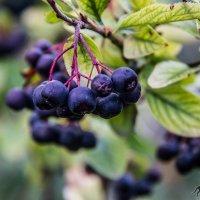 плоды осени :: lev