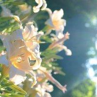 В ботаническом саду :: dimi777 Умлев