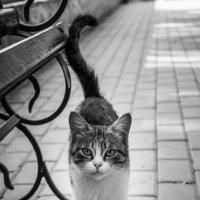 тихо, без звука ходит Мяука... :: Аида Хуснутдинова