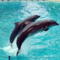 Дельфины :: Владимир Болдырев