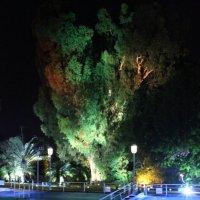 ночное дерево :: Адик Гольдфарб