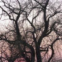 Старое дерево :: Anatol Dzhygyr