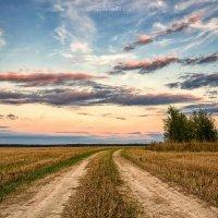 В поле на закате :: Евгений Мазилов