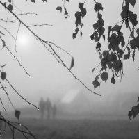 Осеннее утро :: Валерий Талашов