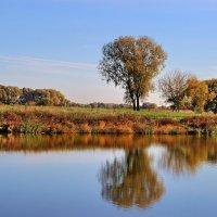 Тишины осенний парафраз... :: Лесо-Вед (Баранов)