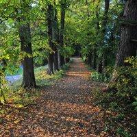 Прогулки по парку :: Андрей Куприянов