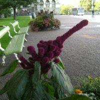 хулиганский цветок :: Марина Домосилецкая