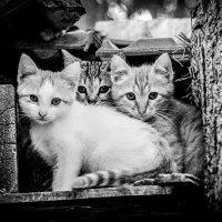 Три брата :: Владимир Kрамс