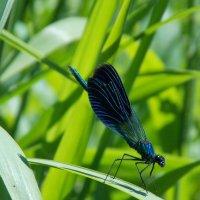 Отдыхающее насекомое. :: Юрий Скрипченков