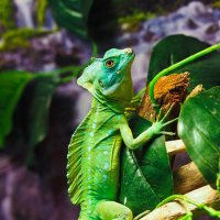 Зелёный и красивый. :: Евгений Мезенцев