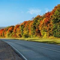 Дорога в осень :: VitokFly
