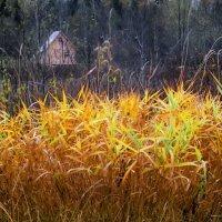 Домик в лесу :: Валерий Талашов