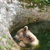 Медвежья фотосессия.Мишка на югах-2. Вид слева. :: Vladimir 070549