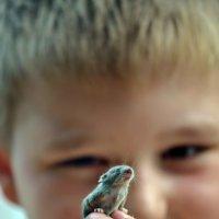 Маленький в Большом мире. :: Valeria