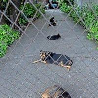 Таиланд. Кон Каен. Пять собак :: Владимир Шибинский