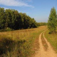 Когда иду я Подмосковьем IMG_0299 :: Андрей Лукьянов
